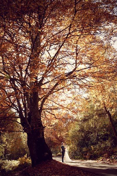 fotos novios bosque